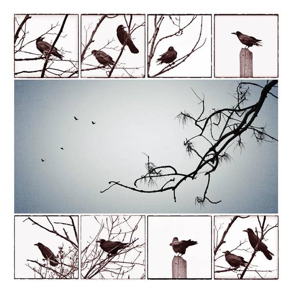 Instagram Photograph - Crows by Marianna Mills