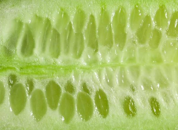 Closeup Wall Art - Photograph - Cucumber by Tom Gowanlock