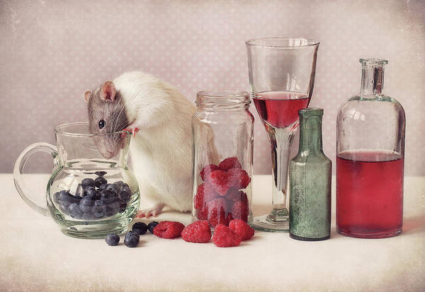Rodents Photograph - Curious by Ellen Van Deelen