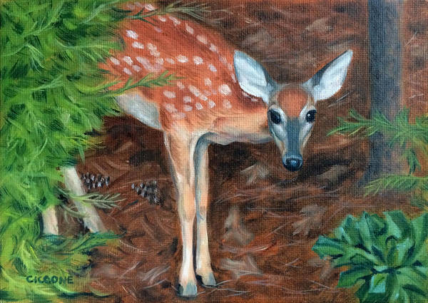 Painting - Curious Fawn by Jill Ciccone Pike