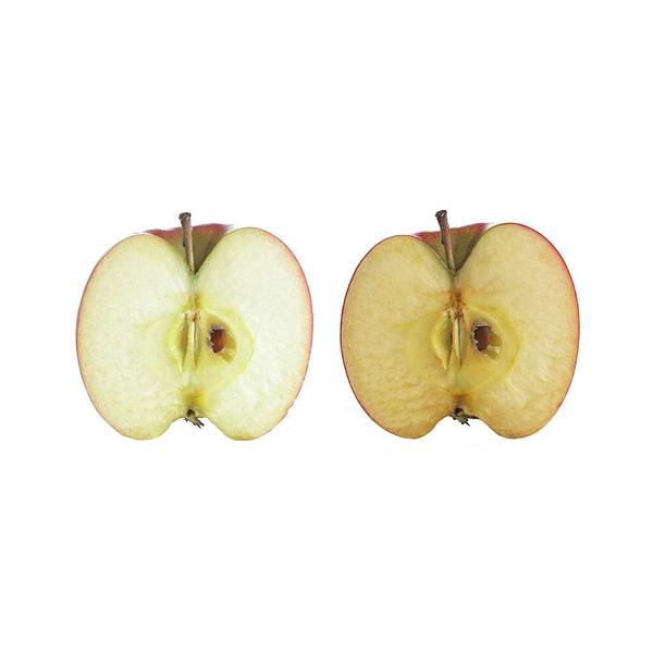 Oxidised Photograph - Cut Apple by Science Photo Library