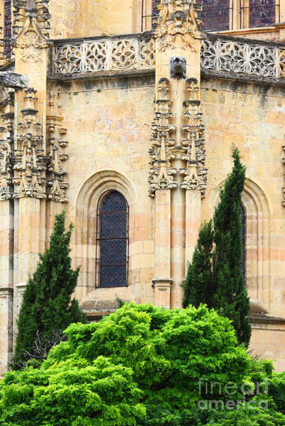 Photograph - Cypress Trees And Segovia Cathedral by James Brunker
