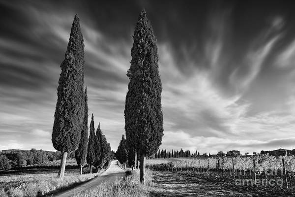 Wall Art - Photograph - Cypress Trees- Tuscany by Rod McLean