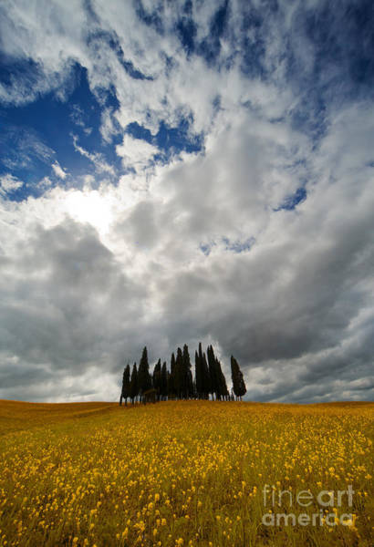 Outdoor Wall Art - Photograph - Cypresses Of Toscany by Jaroslaw Blaminsky