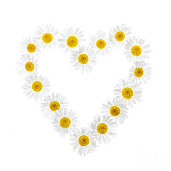 Wall Art - Photograph - Daisy Heart by Elena Elisseeva