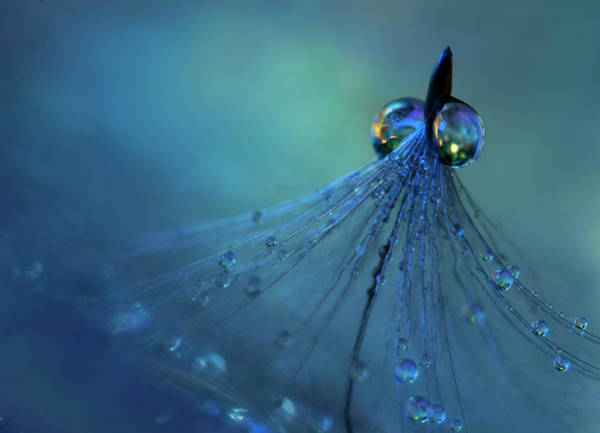 Drop Photograph - Dancing Into The Blue Night by Heidi Westum