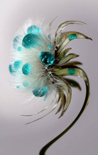 Exquisite Photograph - Dandelion Blues by Krissy Katsimbras