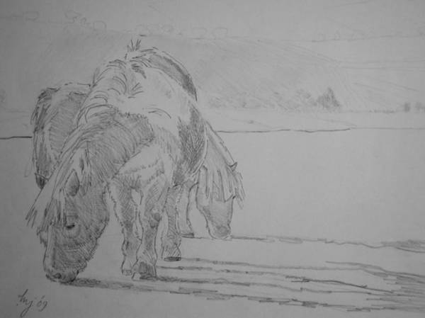 Drawing - Dartmoor Ponies by Mike Jory
