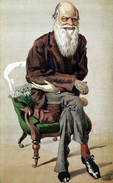 Controversial Wall Art - Photograph - Darwin Caricature by George Bernard/science Photo Library