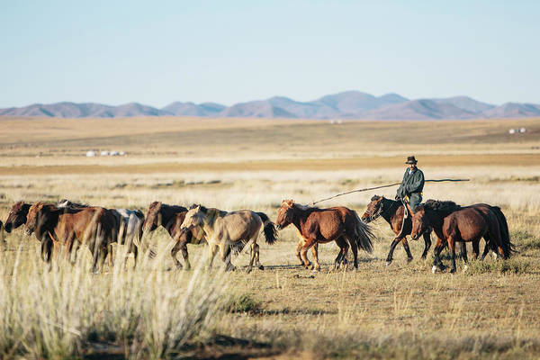 Herd Of Horses Wall Art - Photograph - Dashinchilen, Mongolia by Gavin Gough