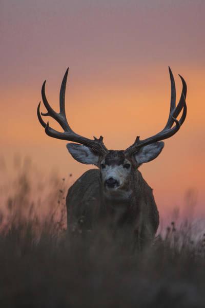 Photograph - Dawn Buck by D Robert Franz