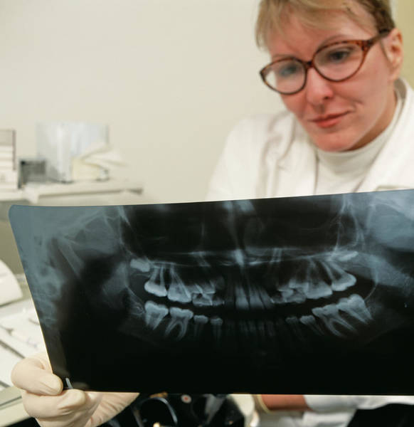 Radiograph Photograph - Dentist by Mark Thomas/science Photo Library