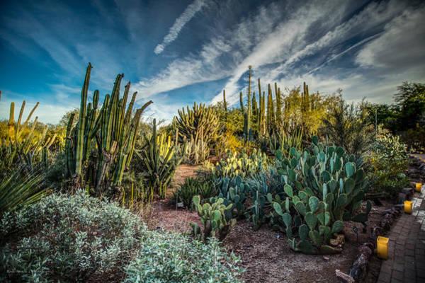 Photograph - Desert Garden Evening by Ross Henton