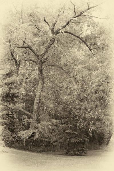 Bolton Photograph - Determination Sepia by Steve Harrington