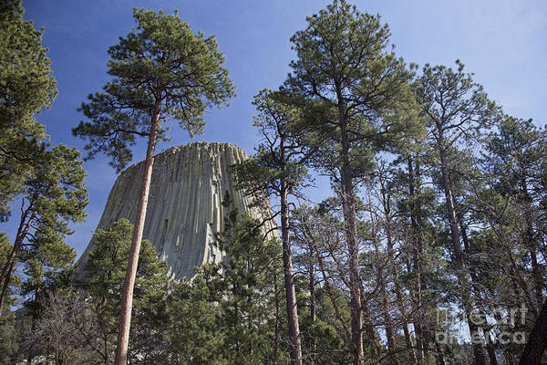 Photograph - Devils Tower by Jim West