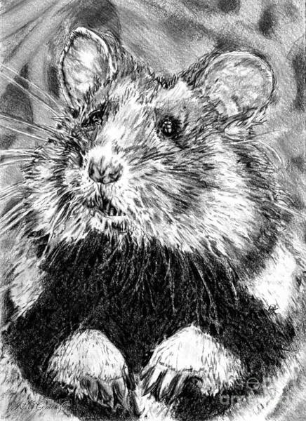 Hamster Drawing - Did Someone Say Nuts by J McCombie