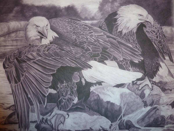 Bald Eagles Drawing - Dinner For Two  by Christine  Blodgett