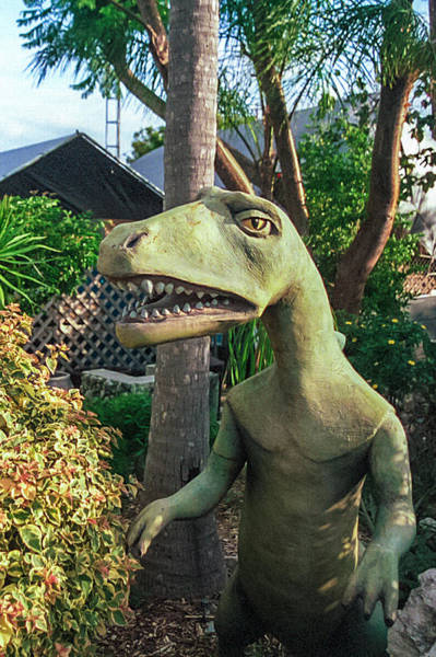 Photograph - Dino -  Key Largo by Jim DeLillo