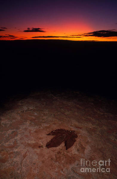 Photograph - Dinosaur Footprint by Francois Gohier