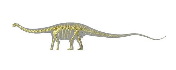 Bone Structure Wall Art - Photograph - Diplodocus Dinosaur Skeleton by Leonello Calvetti/science Photo Library