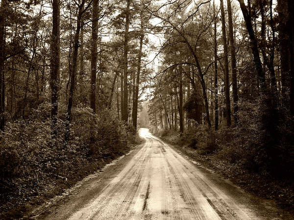 Thicket Photograph - Dirt Road Through The Forest by Mountain Dreams