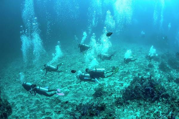 Wetsuit Wall Art - Photograph - Divers Over A Coral Reef by Georgette Douwma