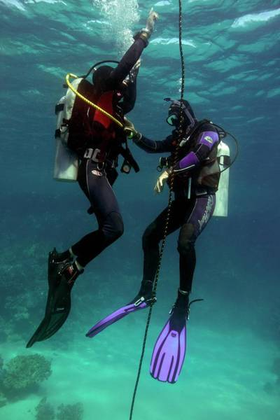 Wetsuit Wall Art - Photograph - Diving Student And Instructor by Louise Murray