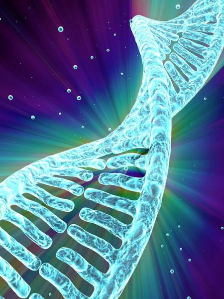Genetic Code Photograph - Dna by Alfred Pasieka