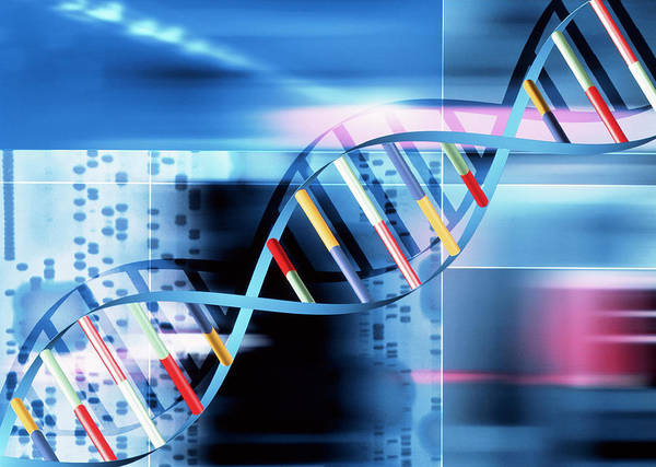 Double Helix Wall Art - Photograph - Dna by Alfred Pasieka/science Photo Library