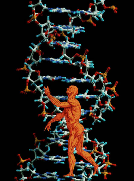 De Humani Corporis Fabrica Photograph - Dna And Human Body by Alfred Pasieka/science Photo Library