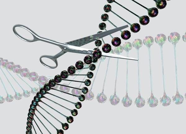 Wall Art - Photograph - Dna Being Cut By Scissors by Victor Habbick Visions/science Photo Library