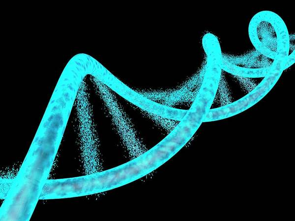 Disintegrate Photograph - Dna Dissolving by Alfred Pasieka/science Photo Library