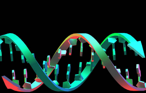 Double Helix Photograph - Dna Helix by Alfred Pasieka/science Photo Library