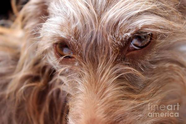 Photograph - Dog Stare by Janice Byer
