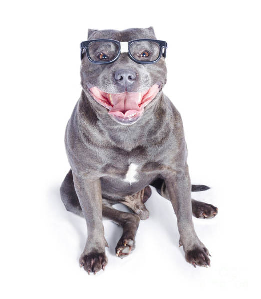 Canine Photograph - Dog Wearing Nerd Glasses by Jorgo Photography - Wall Art Gallery