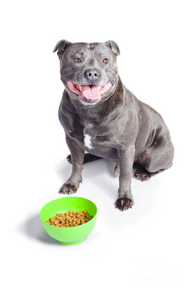 Dog Biscuit Photograph - Dog With Bowl Of Food by Jorgo Photography - Wall Art Gallery