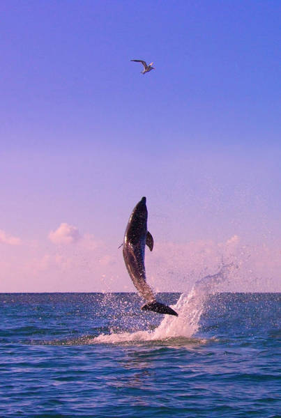 Roatan Photograph - Dolphin Leaping From Sea, Roatan by Keren Su