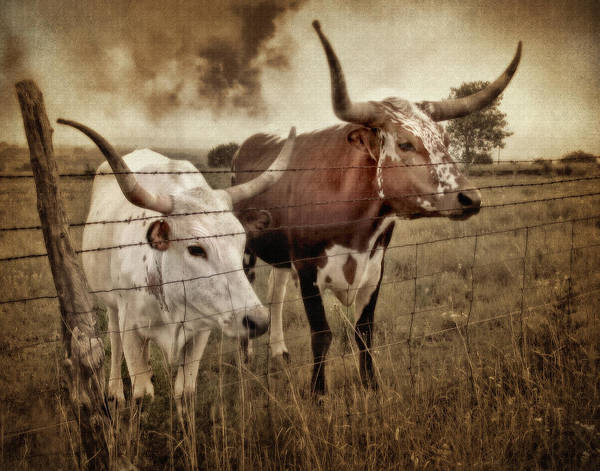 Barb Photograph - Texas Longhorns In Sepia by David and Carol Kelly