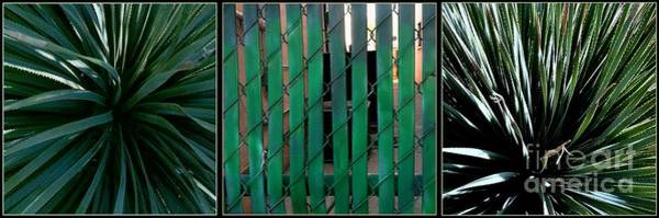 Photograph - Don't Fence Me In by Marlene Burns