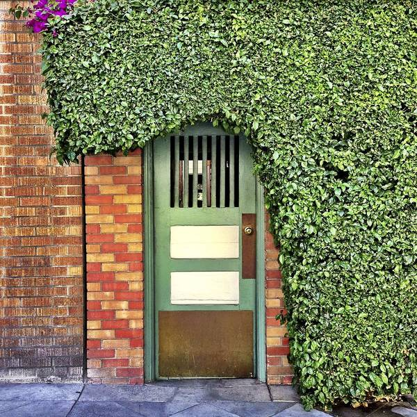 Wall Art - Photograph - Door And Hedge by Julie Gebhardt