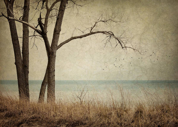 Lakeside Wall Art - Photograph - Drifting by Amy Weiss