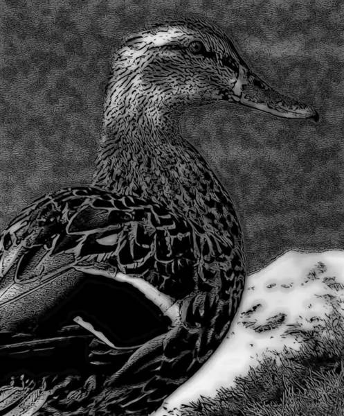 Mixed Media - Duck Art Tribal Mallard Bw II by Lesa Fine