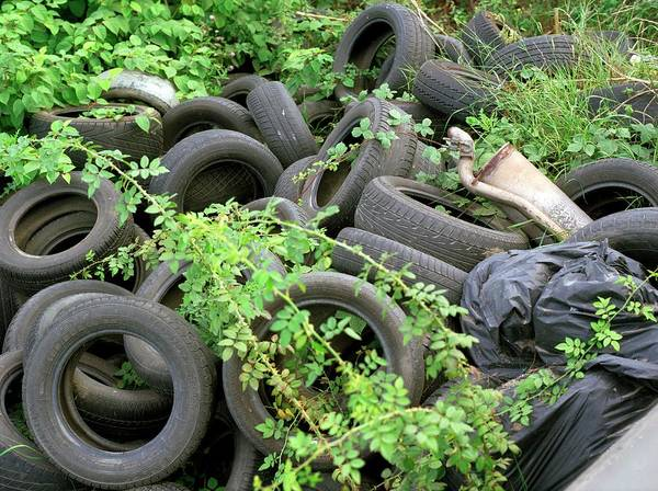 Tyre Wall Art - Photograph - Dumped Tyres by Robert Brook/science Photo Library