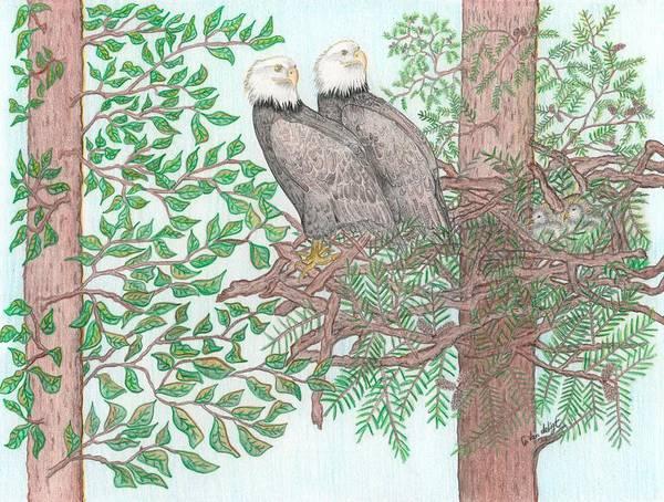 Baby Eagle Drawing - Eagle Family by Carolann Van de Ligt