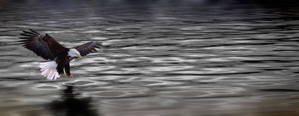 Wall Art - Photograph - Eagle Over Water by Panoramic Images