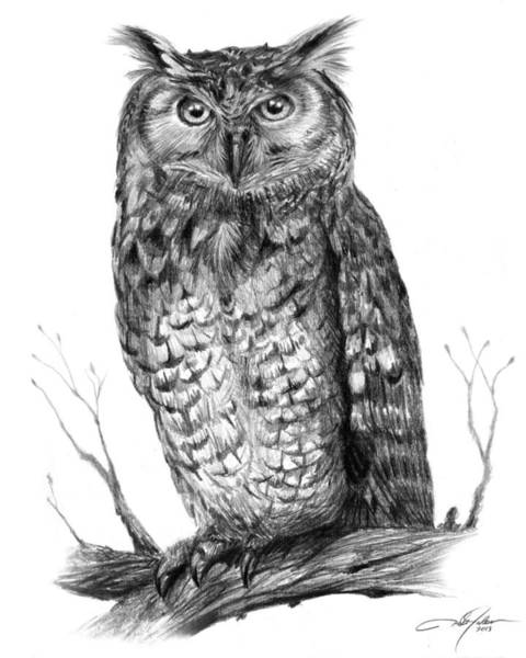 Eagle Drawing - Eagle Owl by Dale Jackson