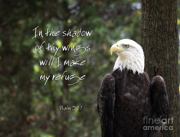 Photograph - Eagle Scripture by Jill Lang