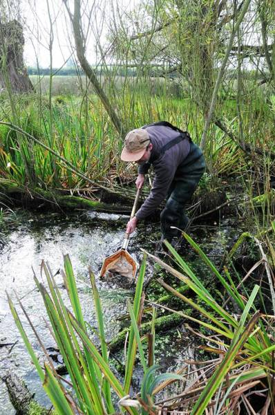 Trapping Photograph - Ecology Research by Sinclair Stammers/science Photo Library