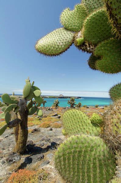 Oceanfront Photograph - Ecuador, Galapagos, South Plaza Island by Cindy Miller Hopkins