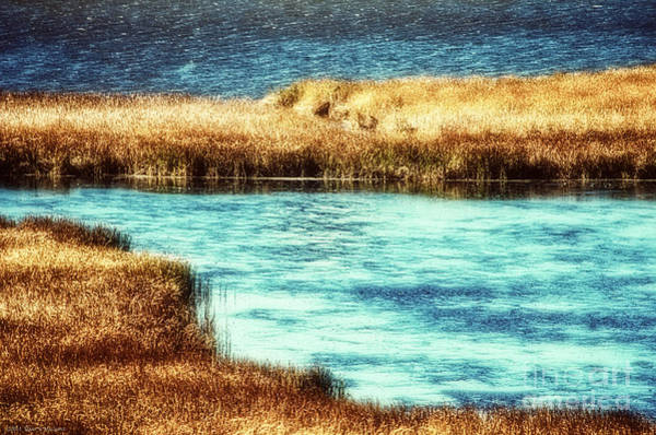 Horicon Wall Art - Photograph - Edge Of The Marsh by Mary Machare